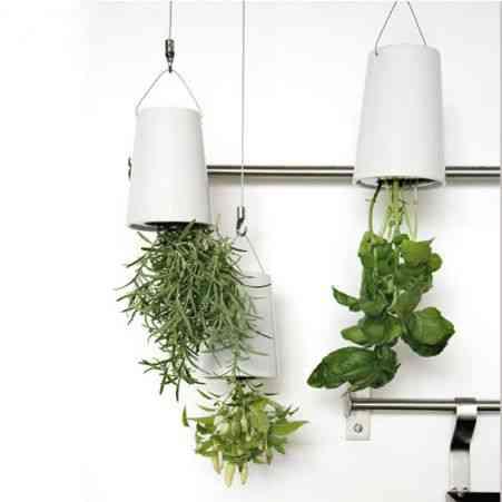 plantas bocabajo