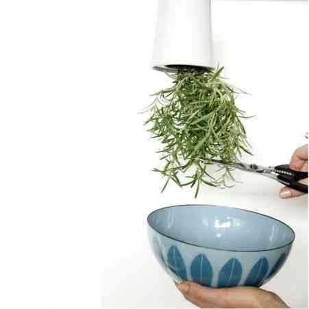 plantas bocabajo2