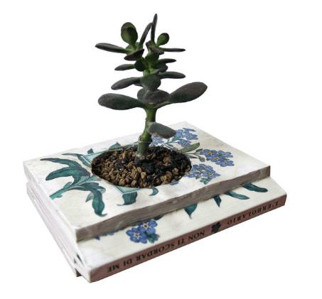 libro maceta para cactus