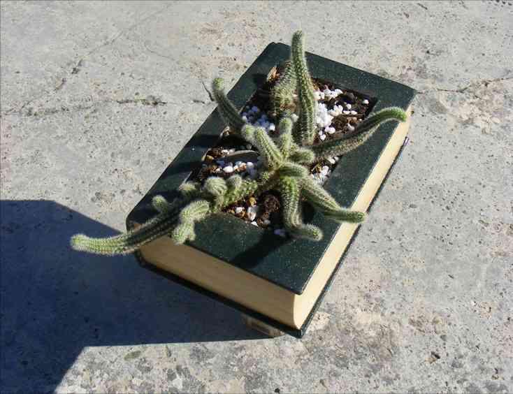Un cactus en tu libro maceta