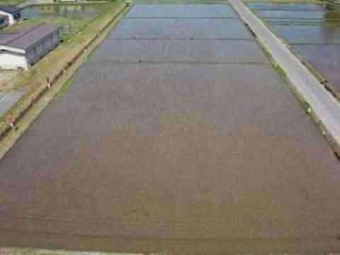 Decorando campos de arroz 2