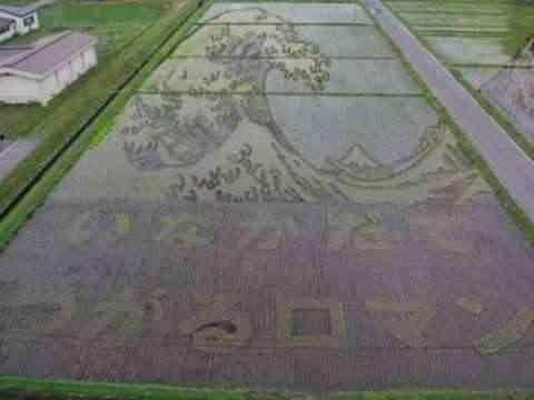 Decorando campos de arroz 4