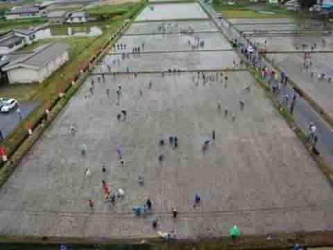 Decorando campos de arroz