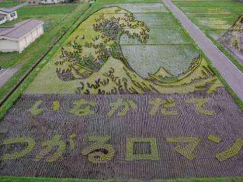 Decorando campos de arroz 5