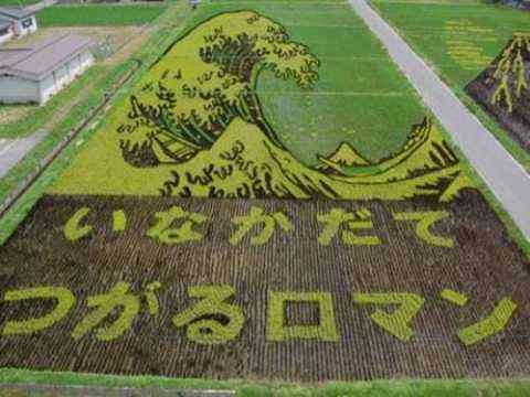 Decorando campos de arroz 6