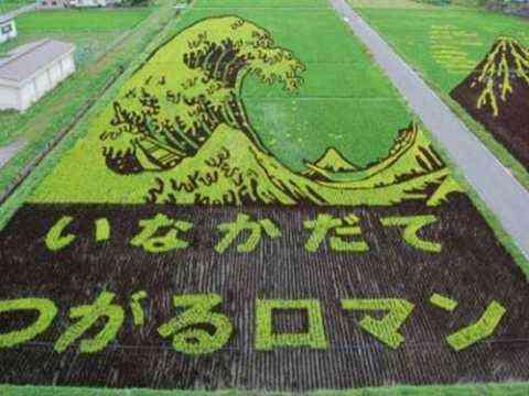 Decorando campos de arroz 7