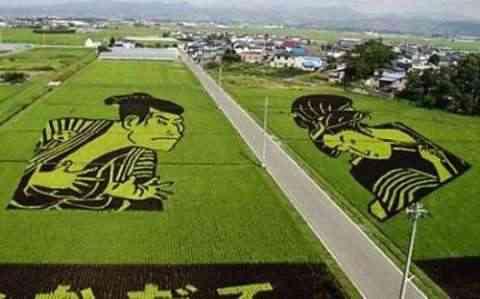 Decorando campos de arroz figuras sumo