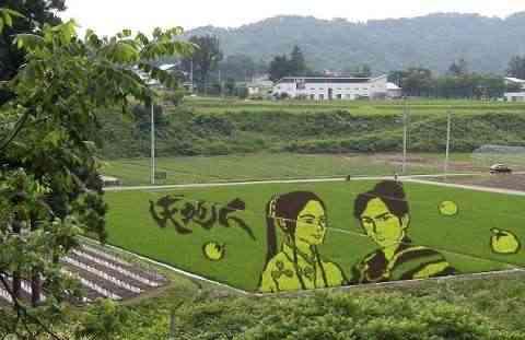 Decorando campos de arroz japos
