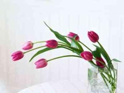 alargar la vida de flores - tulipanes