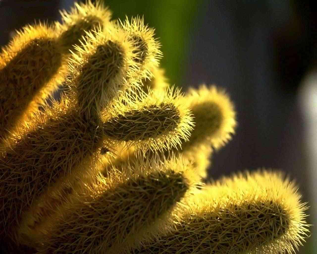 cactus-FENGSHUI