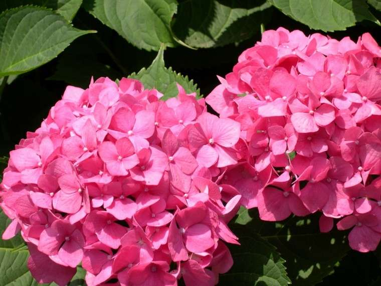 Feng shui las plantas que no deber as utilizar en casa - Potus planta de mala suerte ...