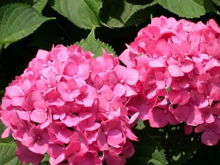 Feng shui las plantas que no deber as utilizar en casa for Plantas para dormitorio feng shui