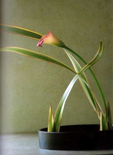 ikebana phormium calla