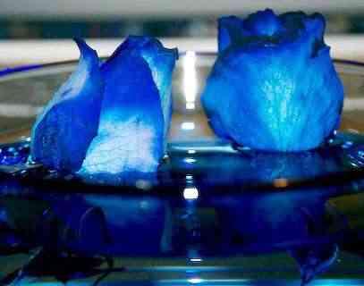 http://decoracion2.com/imagenes/2011/02/rosas-azules1.jpg