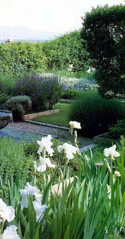 jardin con plantas de flor