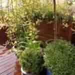 jardin en terraza de madera