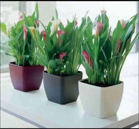 Plantas de interior para decorar la oficina for Decoracion de plantas