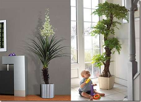 plants-to-decorate1