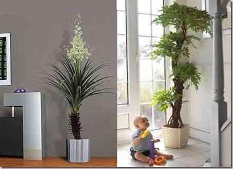plantas-para-decorar1