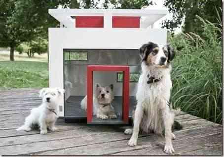 casa-perro-moderna-3