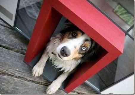 casa-perro-moderna-4
