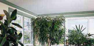 Plantas para decoración de interiores