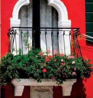 Plantas de balcón: consejos