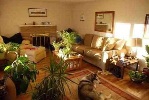 Plantas en la decoración de interiores
