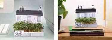 plantas en la decoracion