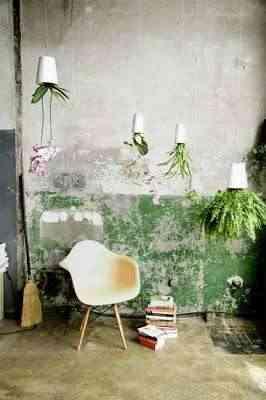 plantas_decoracion