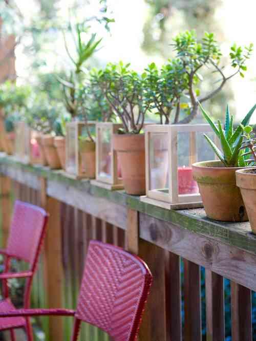 plantas y velas
