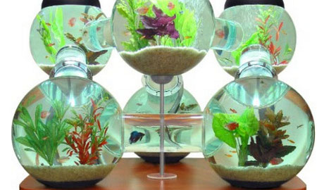 Un laberinto para tus peces con peceras de dise o for Peces para pecera