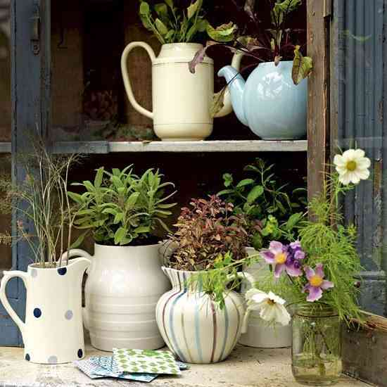 teapots with plants