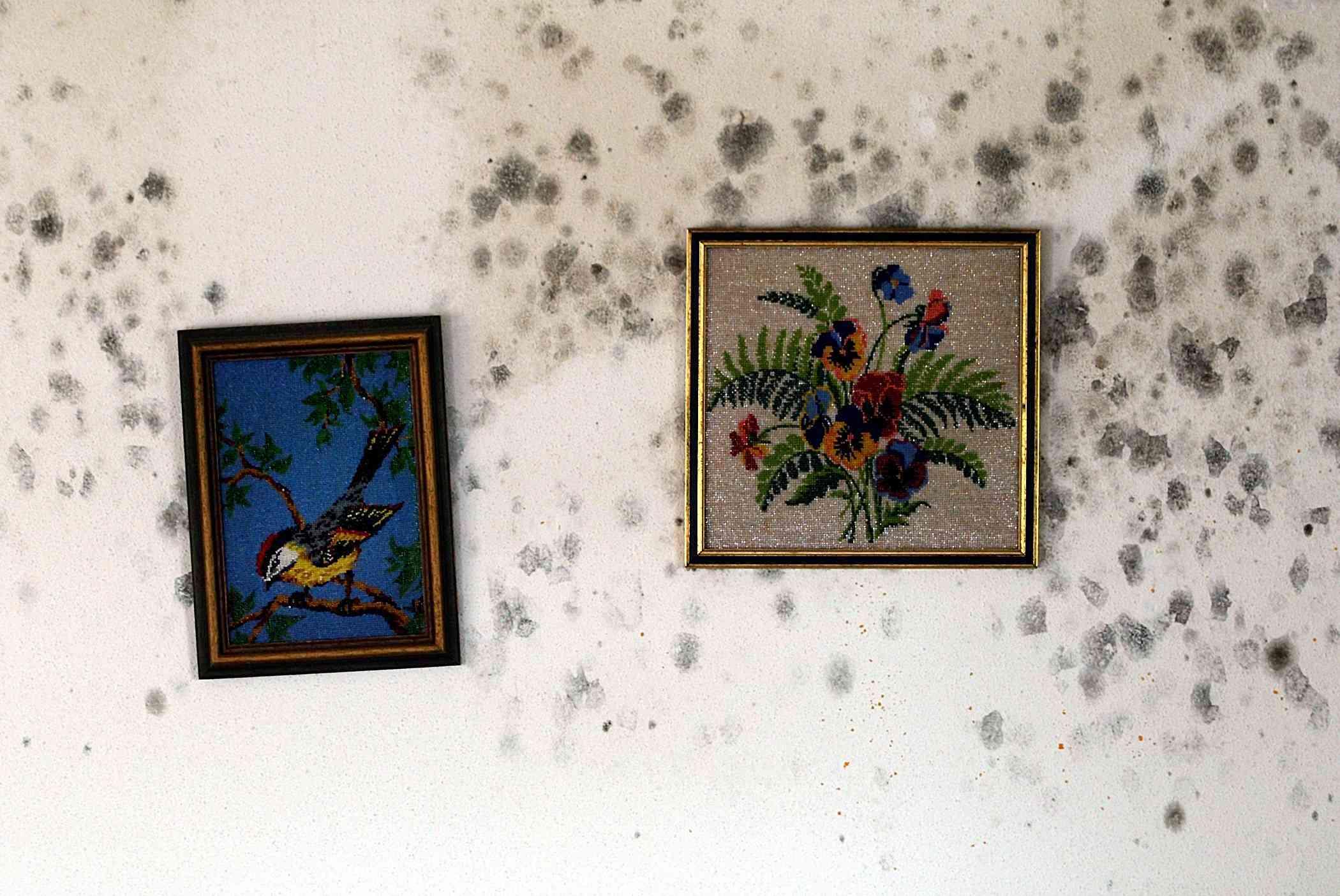 C mo limpiar el moho de las paredes - Como limpiar paredes pintadas ...