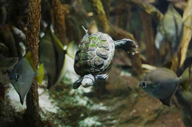 C mo limpiar el acuario de tu tortuga for Acuario tortugas