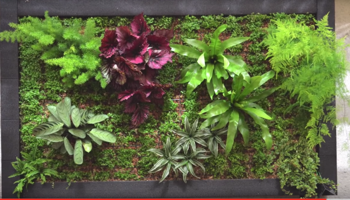 Ideas para hacer un jard n interior en casa - Como hacer un jardin vertical de interior ...