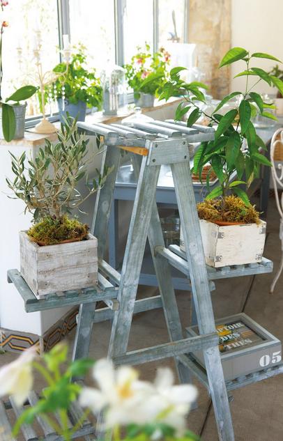 Escalera de plantas