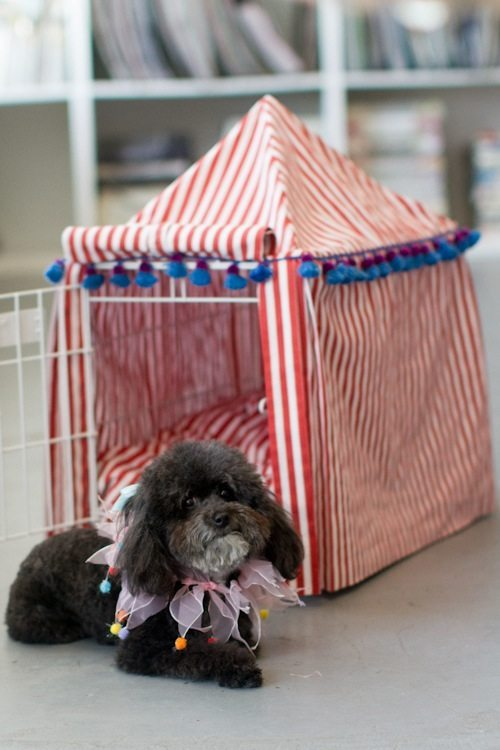 caseta perro jaula