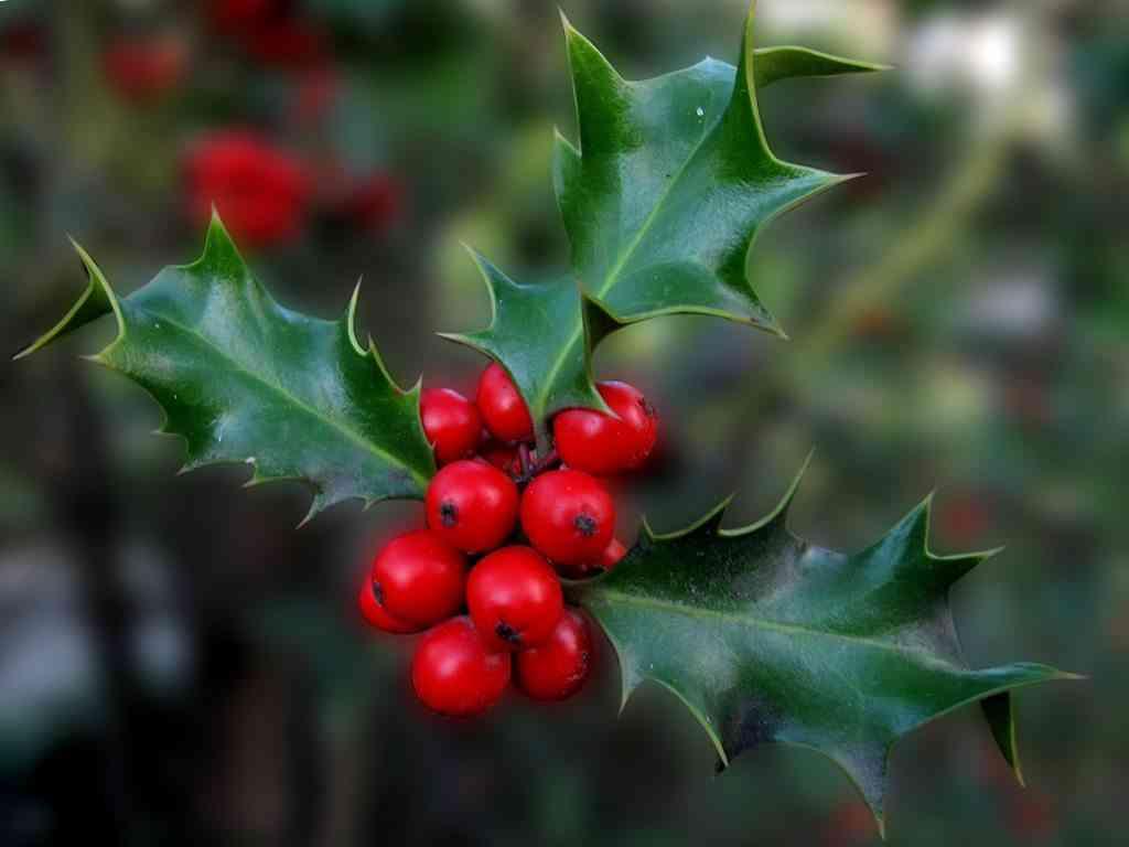 el mejor árbol de Navidad