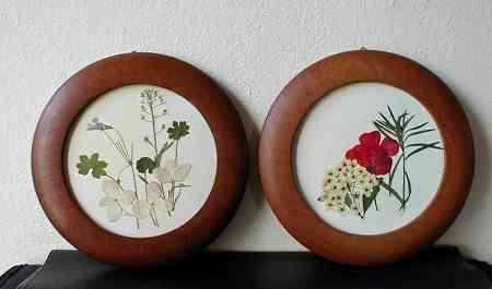 cuadros flores secas