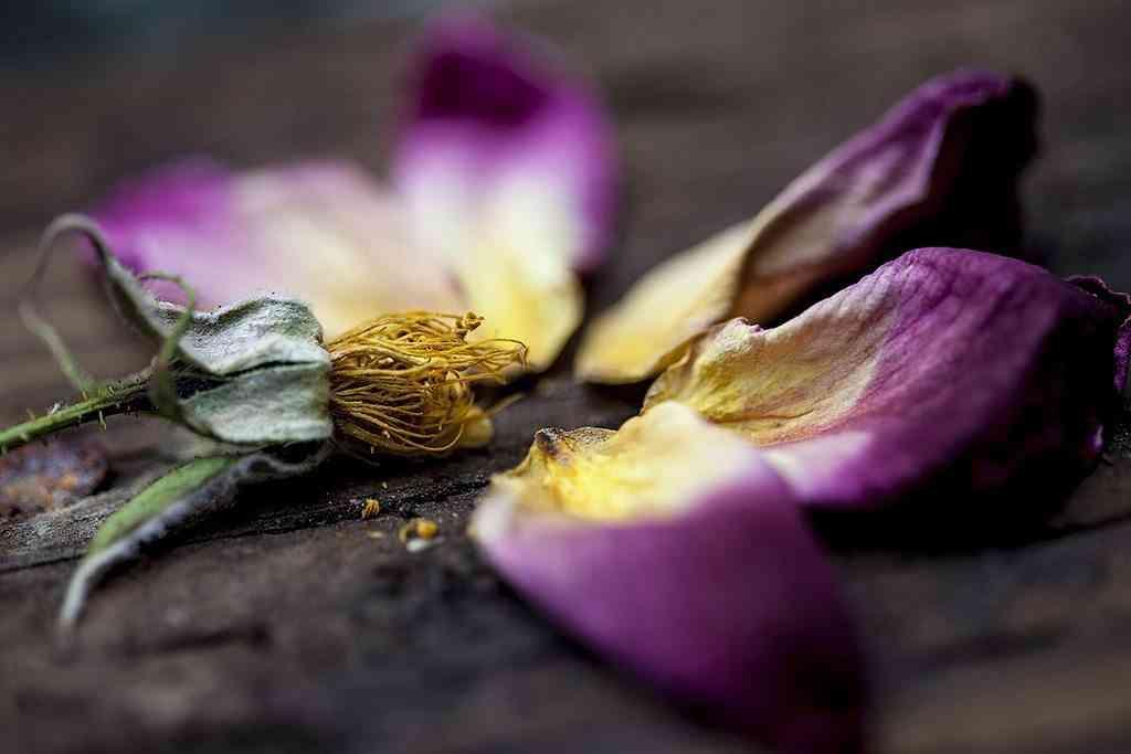 Pétalos de flores secos