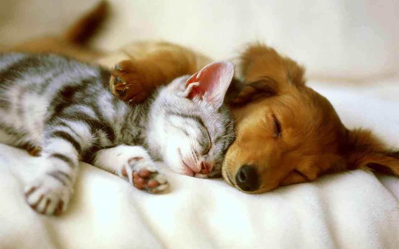 mascotas en el hogar