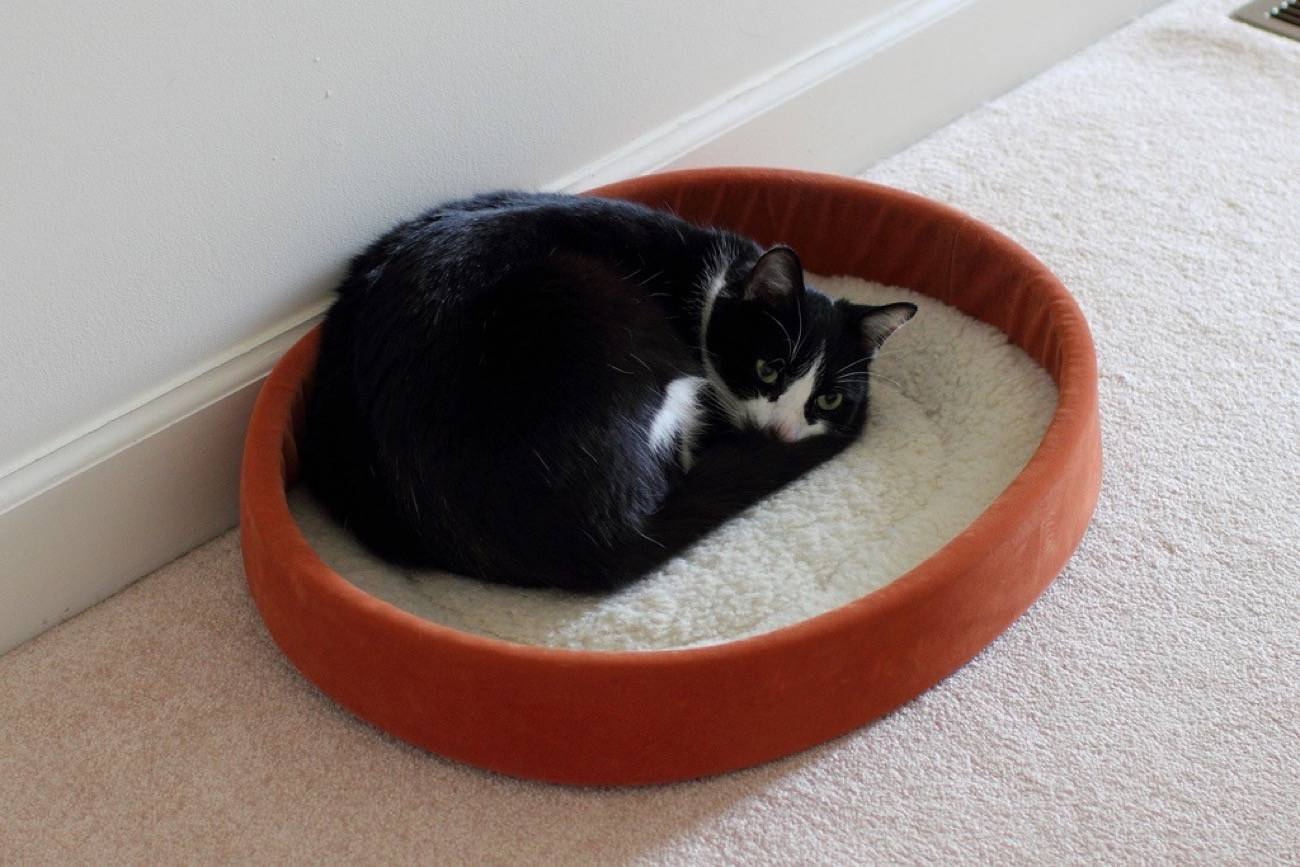 cama para el gato