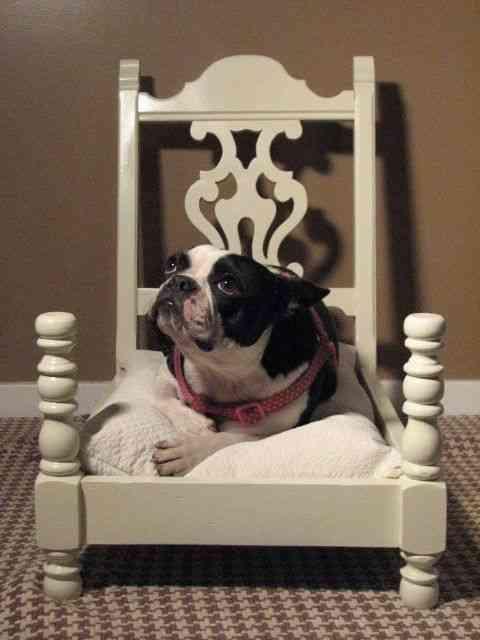 cama de perro en silla