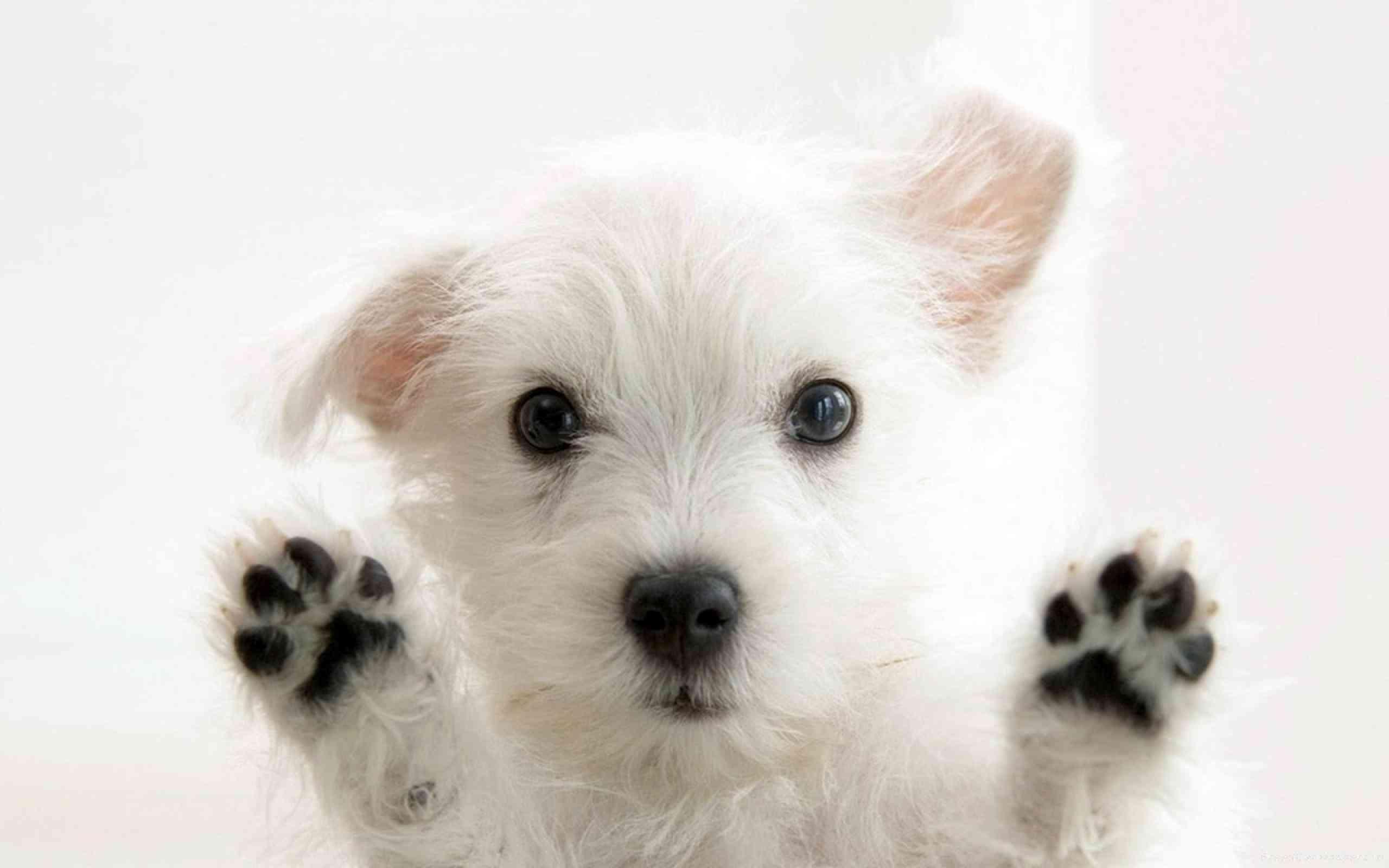 peinar al perro