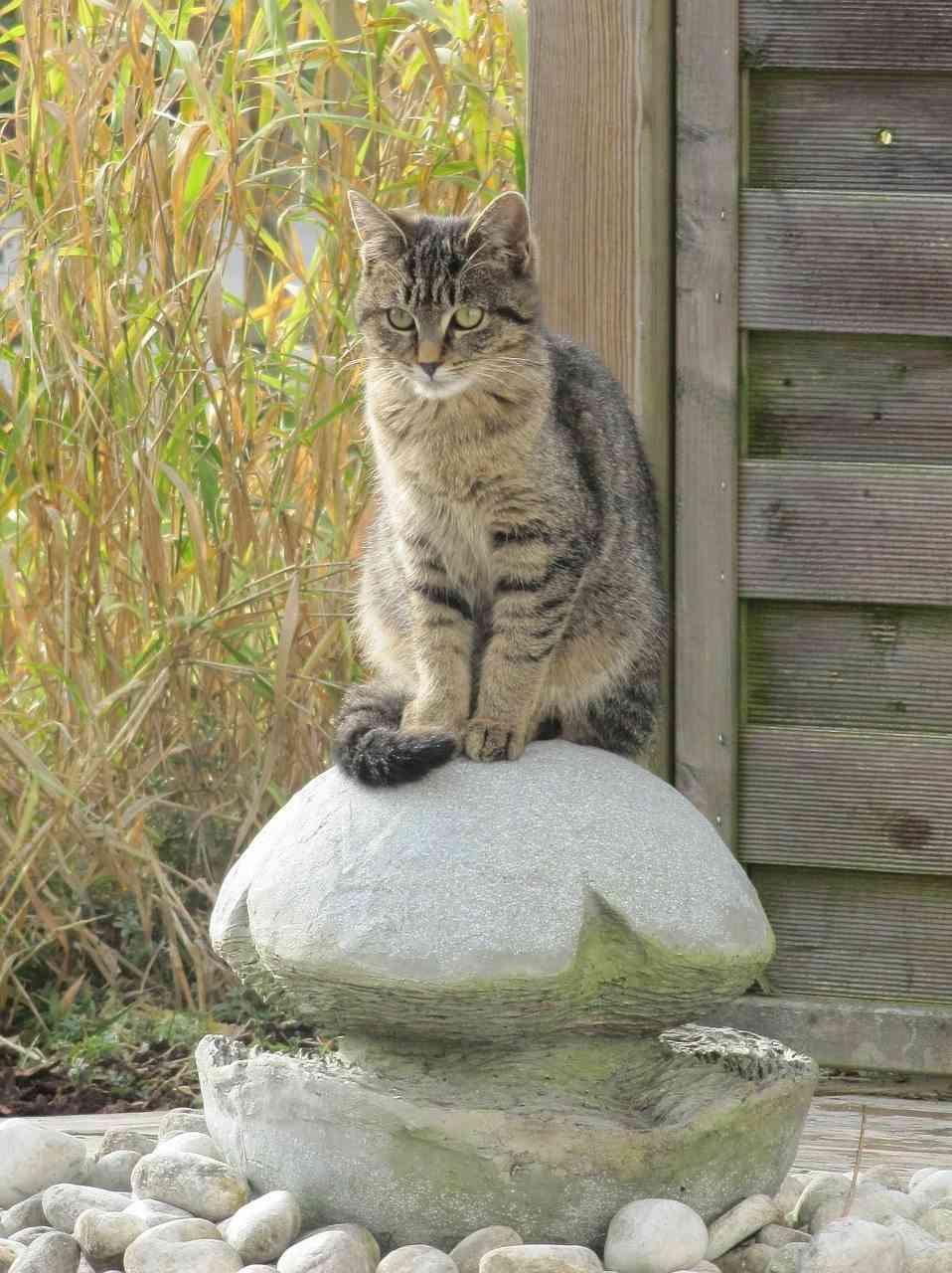 entradas de casas - gato en una fuente