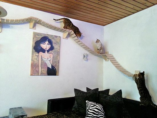 A highway for our cat at home