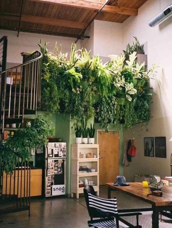Un idea fresca. Plantas colgantes para la mejor decoración