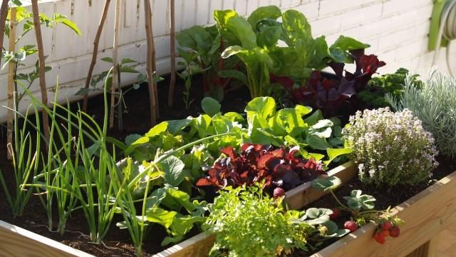 C mo crear un huerto en casa con hierbas arom ticas - Invernadero casero terraza ...