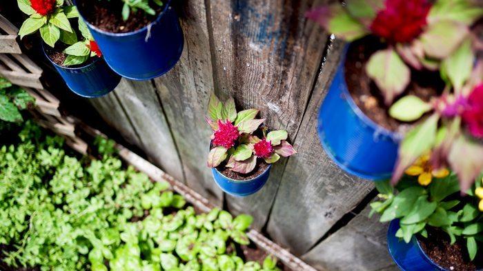 Jardin con latas, espacio para tus plantas